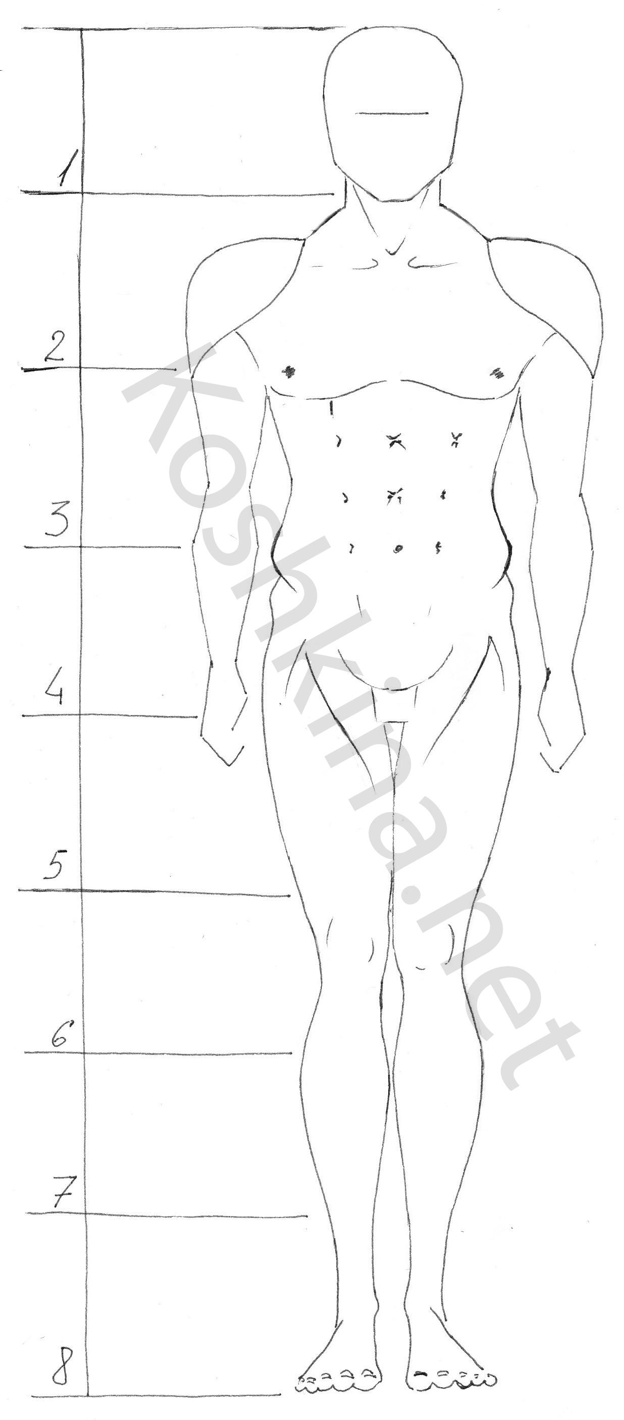 как правильно рисовать тело человека: