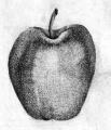 Рисование яблока карандашом поэтапно