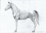 Как рисовать лошадь поэтапно карандашом