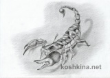 Рисование скорпиона карандашом